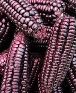 الذرة الأرجوانية..هل تفيد مرضى السكري؟