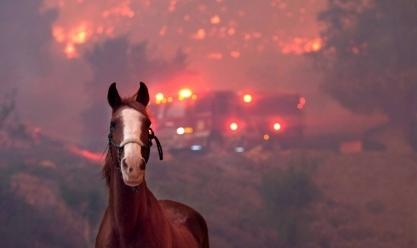 عدد المفقودين جراء الحريق في كاليفورنيا يتجاوز 1000 شخص