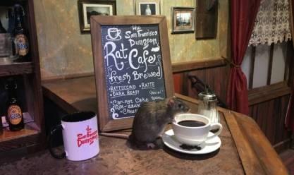 مقهى للفئران في سان فرانسيسكو.. 50 دولار مقابل كوب القهو