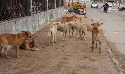 """""""الزراعة"""" عن واقعة ذبح الكلاب في حلوان: """"مش مسؤوليتنا لوحدنا"""""""