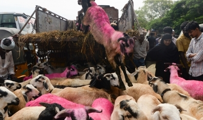 المسلمون حول العالم يحتفلون بـ عيد الأضحى المبارك بذبح الأضاحي