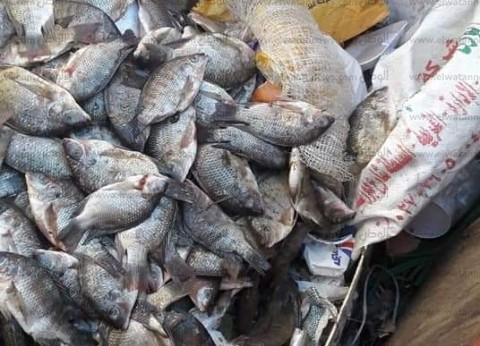 ضبط لحوم وأسماك فاسدة خلال حملة في الغردقة