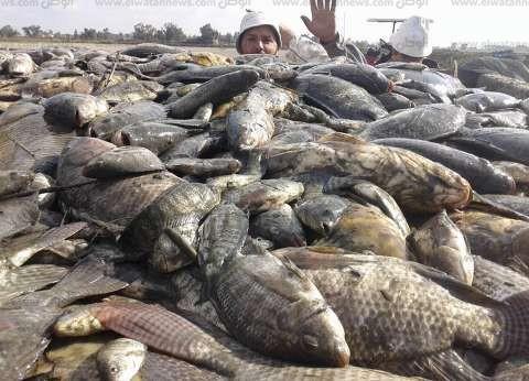 """""""الزراعة"""" و""""التموين"""" تطرحان أسماك بـ""""أسعار مخفضة"""""""