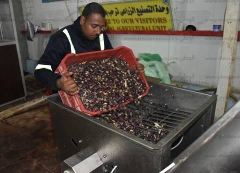 رئيس مركز بحوث الصحراء: أنشأنا أول مصنع لإنتاج زيت الزيتون بمدينة براني