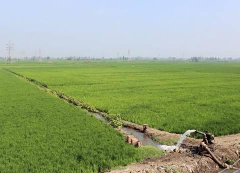 الوادي الجديد: زيادة الرقعة الزراعية عن الموسم الماضي بـ22510 فدادين