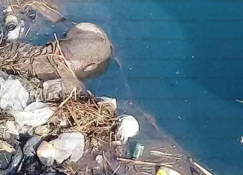 انتشال جثة طفل من نهر النيل في قنا