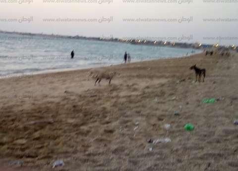 بالصور| انتشار ظاهرة الكلاب الضالة بمدن جنوب سيناء
