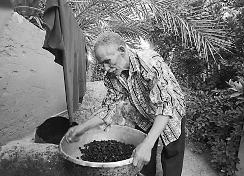 عصَّارة «شيخ البلد».. زيت الزيتون على الطريقة القديمة