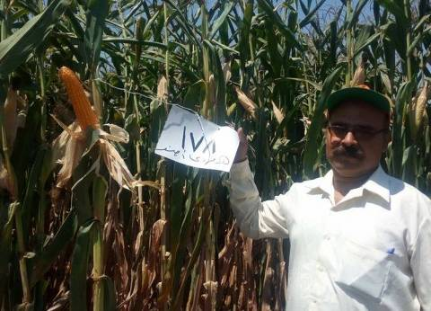 """""""زراعة المنوفية"""": البدء في الاستعداد لموسم الذرة الشامية"""