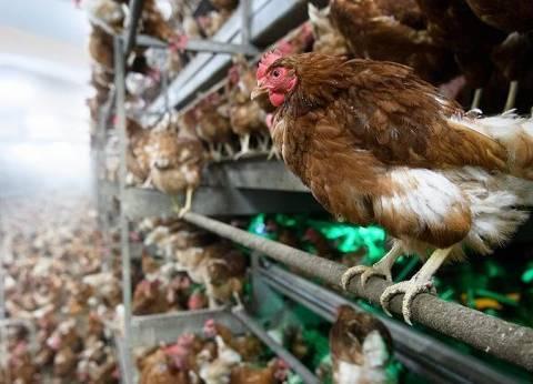"""فرنسا تعلن انتهاء وباء إنفلونزا الطيور من سلالة""""إتش 5- إن 8"""" في البلاد"""
