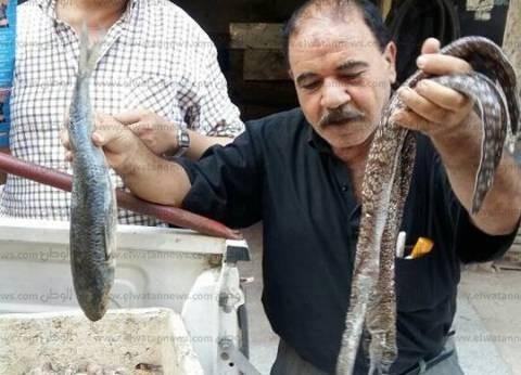 """ضبط 33 كيلو أسماك """"العقرب"""" و""""الثعابين"""" السامة قبل بيعها بالبحيرة"""