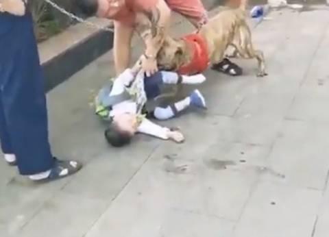 بالفيديو| إنقاذ طفل من أنياب كلب شرس بأعجوبة