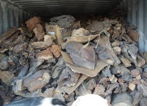 بالصور| تفاصيل إحباط محاولة تهريب أشجار متحجرة وحفريات نادرة للصين