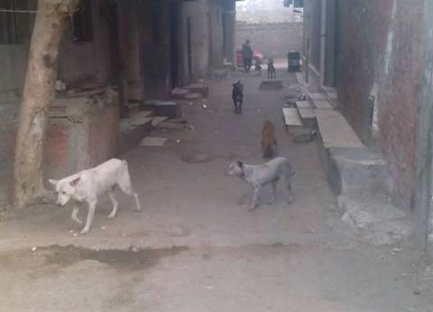 حملة للقضاء على الكلاب الضالة بمنشأة ناصر