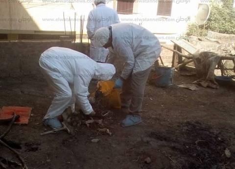"""""""بيطري المنيا"""" تحصن 3 مراكز بعد اكتشاف حالات مصابة بأنفلونزا الطيور"""
