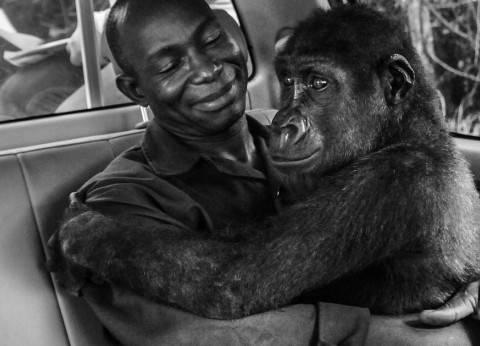 """مصورو العالم يتضامنون لإنقاذ الحياة البرية.. """"لا للاتجار بالحيوان"""""""