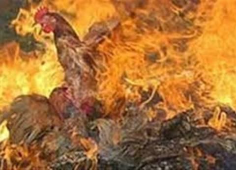 """نفوق 4 آلاف دجاجة في حريق هائل بمزرعة قرية """"طوخ طنبشا"""""""