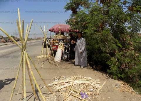 محافظ المنيا: حظر نقل محصول قصب السكر خارج حدود المحافظة لـ3 أشهر