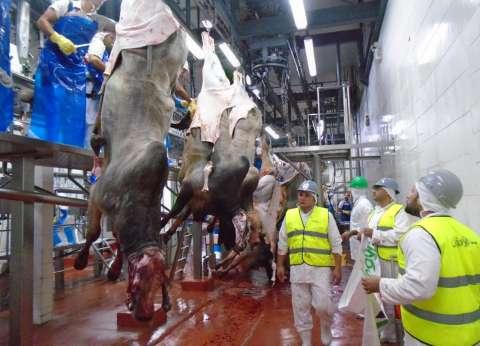 ذبح 30 رأس ماشية وتوزعها في المنيا أول أيام العيد