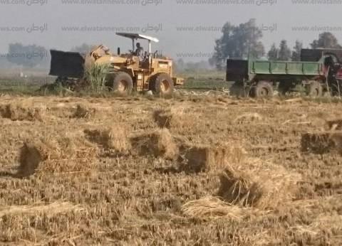 """""""البيئة"""": تحرير 1036 محضر حرق """"قش الأرز"""" في 6 محافظات"""