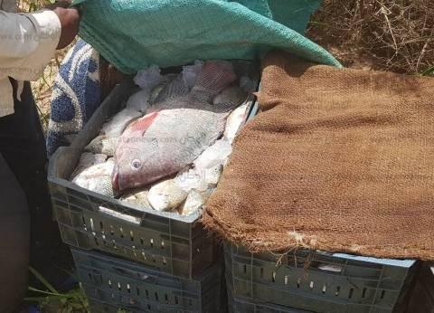 ضبط 12 صيادا حاولوا تهريب 2100 كيلوجرام أسماك من بحيرة ناصر