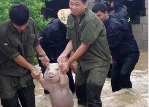 صورة خنزير مبتسم تثير ضجة على مواقع التواصل الاجتماعي