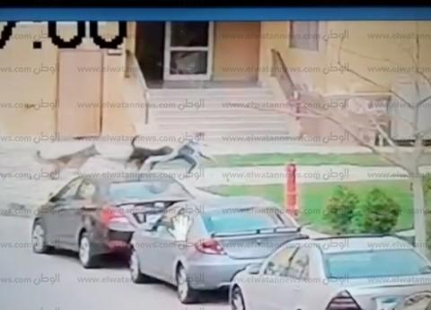 """عمرو أديب عن هجوم كلبين على طفل بـ""""مدينتي"""": """"لازم يتقتلوا"""""""