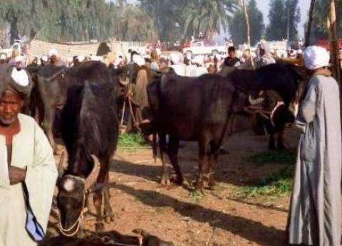 """تحصين أكثر من 10 آلاف رأس ماشية في حملات لـ""""بيطري ببورسعيد"""""""