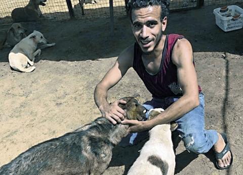 حملات لحماية الكلاب من أهالى «حدائق الأهرام»