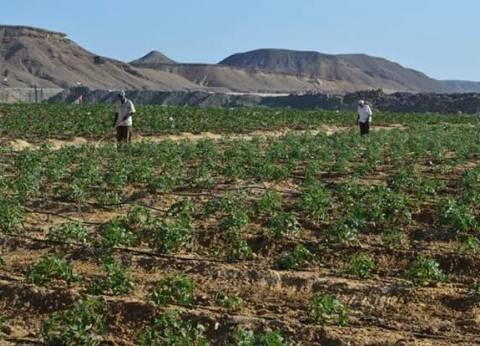 رئيس مدينة القصير يتابع إنتاج محاصيل مزرعة القويح