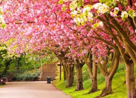 بلاي ليست| أشهر أغاني الربيع في شم النسيم