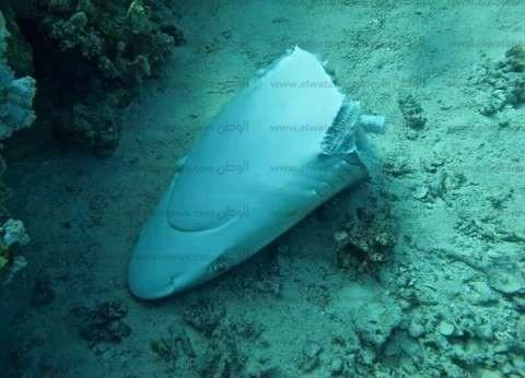 """بالصور  """"المحافظة على البيئة"""" ترصد جرائم لقتل أسماك القرش في البحر الأحمر"""