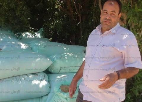 بالصور| مزارعو جنوب سيناء يطالبون بتوفير شون لتخزين القمح وتسويقه