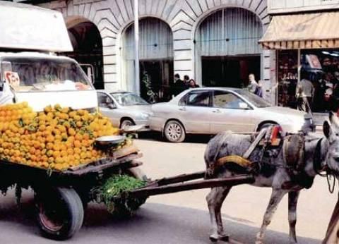 محافظ القاهرة يطالب إدارة المرور بضبط عربات الكارو وتسليمها للأحياء