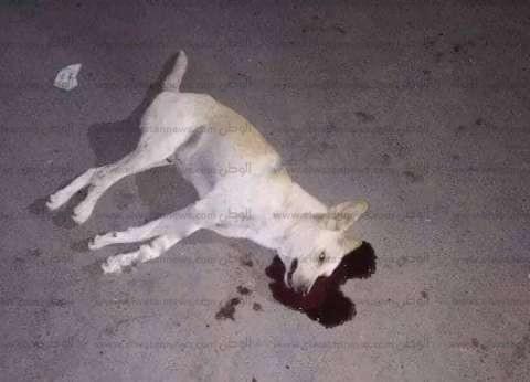 رئيس حي السيدة زينب: نشن حملة ليلية مرتين أسبوعيا ضد الكلاب الضالة