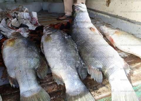 ضبط 350 كيلو أسماك مجمدة مجهولة المصدر بالبحيرة