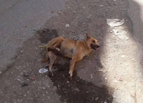 كلاب مسعورة تعقر 17 طفلا في أسيوط