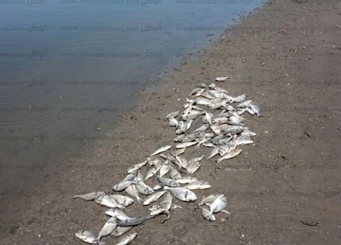 """""""الثروة السمكية"""" في دمياط تخاطب المتضررين من نفوق الأسماك بتقديم شكاوى"""