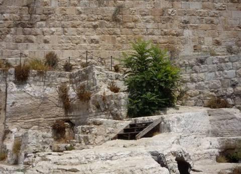 """طفل روسي يعثر على خاتم يرجع إلى عهد """"الملك سليمان"""" في فلسطين"""