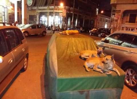 يحدث فى الهرم: الشباب يحاربون الكلاب باللافتات.. والسيدات بـ«الشطة»