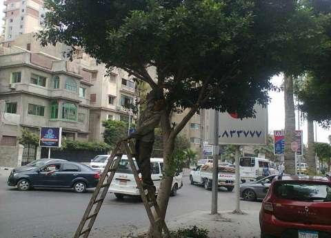 حي وسط بالإسكندرية يستكمل أعمال تقليم وتزيين الأشجار والنخيل