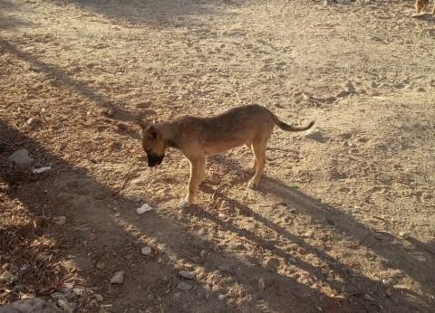 حملة للقضاء على الكلاب الضالة في القصاصين بالإسماعيلية