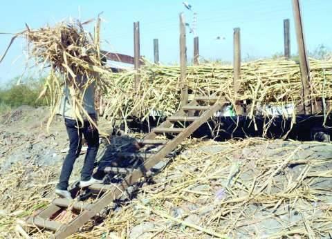 """""""البيئة"""": 14.5 مليون جنيه لشراء معدات لمواجهة موسم قش الأرز"""