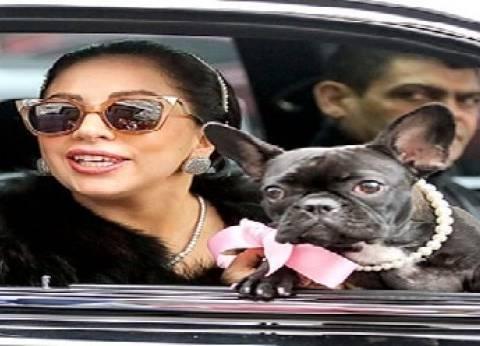 قطط وكلاب مشاهير هوليوود الأعلى متابعة على «إنستجرام»