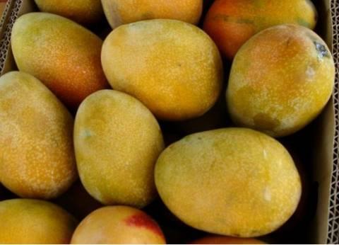 أسعار الفاكهة اليوم الخميس 14/ 6/ 2018
