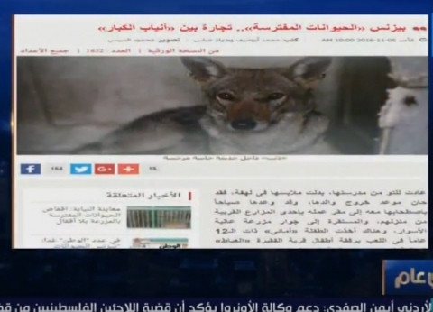 """عمرو عبدالحميد يبرز تحقيق """"الوطن"""" حول """"بيع وشراء الحيوانات المفترسة"""""""