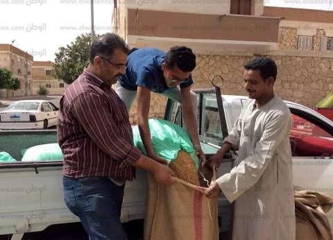 """""""زراعة جنوب سيناء"""": تجميع 35 طن قمح من المزارعين وتوريدها لشون السويس"""