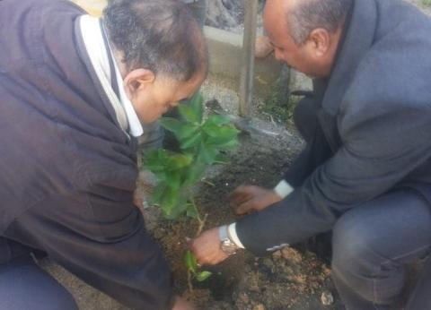 زراعة 35 شجرة مثمرة بـ5 مدارس غرب الإسكندرية ضمن مبادرة الرئيس