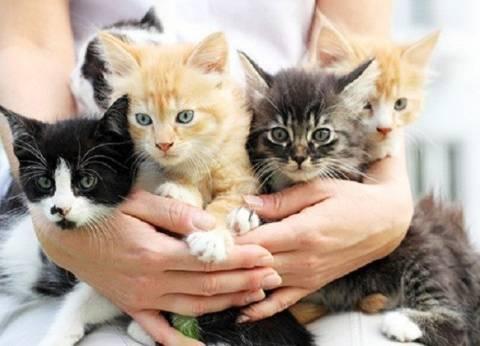 20 فيديو «طريف» لقطط من جميع أنحاء العالم