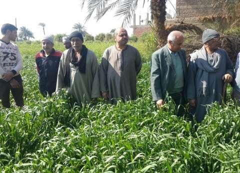 """""""الزراعة"""" تنظم قوافل بيطرية وإرشادية إلى الوادي الجديد"""